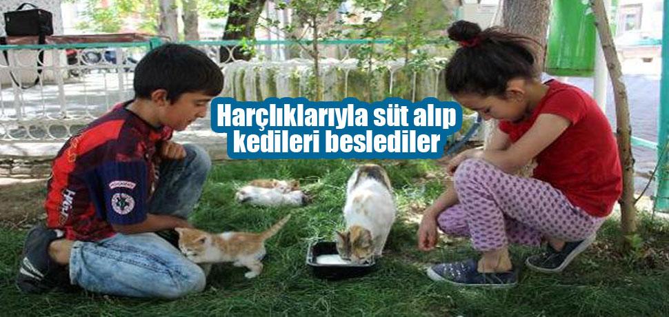 Harçlıklarıyla süt alıp kedileri beslediler