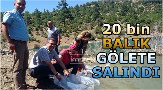 20 bin balık gölete salındı