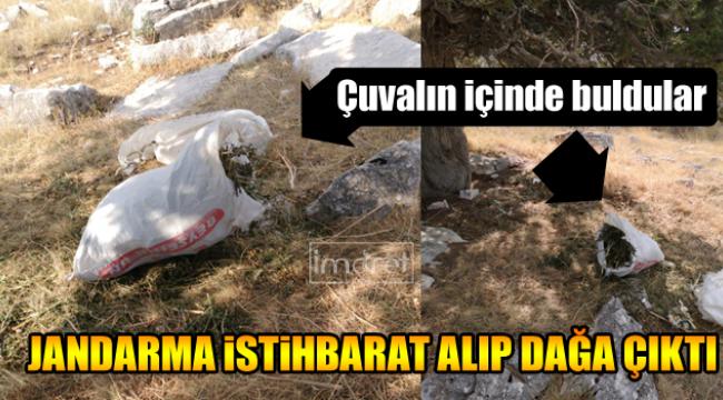 Jandarma arazide çuval içinde buldu