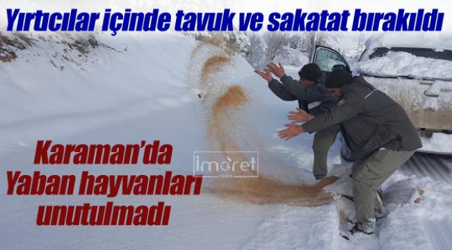 Karaman'da yaban hayvanları unutulmadı