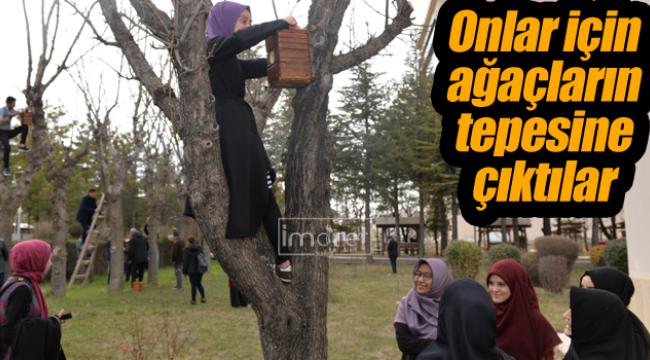 Onlar için ağaçların tepesine çıktılar