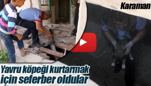 Karaman'da yavru köpeği kurtarma operasyonu