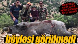 Karaman'da yarım tonluk dev domuzlar vuruldu