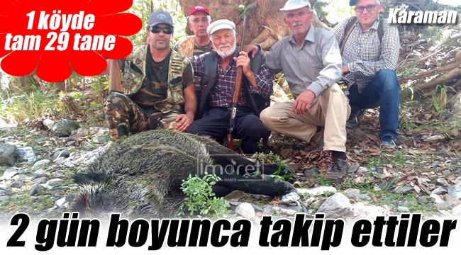 1 köyde 29 yaban domuzu itlaf edildi