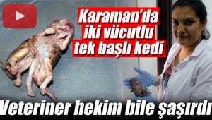 Karaman'da çift vücutlu tek kafalı kedi veterineri bile şaşırttı
