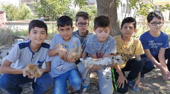 Çocuklar ölen anne kedinin yavrularına sahip çıktı