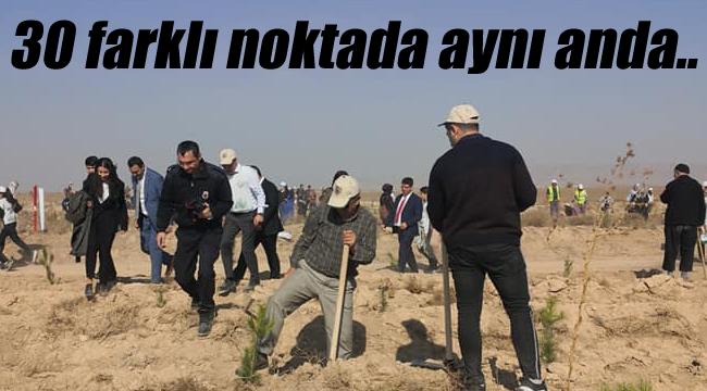 Binlerce fidan toprakla buluştu
