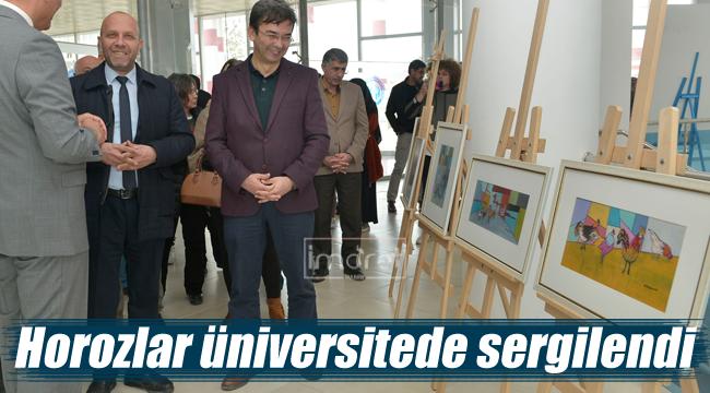 Horozlar üniversitede sergilendi