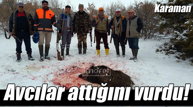 Sürek avında yaban domuzları itlaf edildi