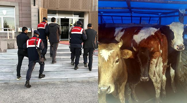 Hayvan hırsızları jandarmanın takibiyle yakalandı