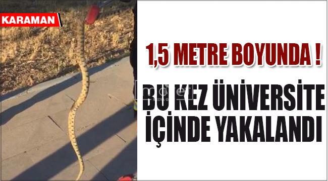 Üniversite bahçesinde yılan paniği !