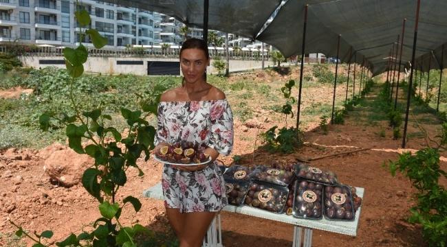 Alanya'da tropikal meyve kazanç kapısına dönüştü