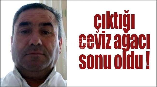 Karaman'da çıktığı ceviz ağacından düşüp öldü