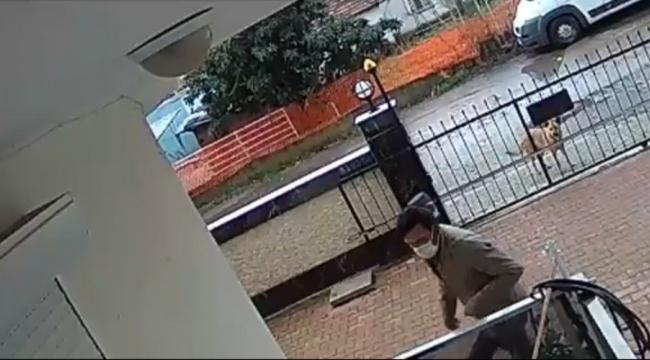 Balkondan masa çalan hırsıza köpek bile baktı kaldı