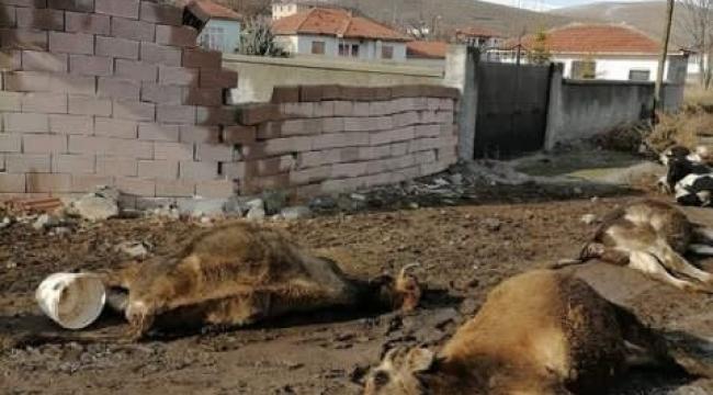 Gölbaşı'nda şiddetli rüzgarda kopan kablolar 9 hayvanı telef etti