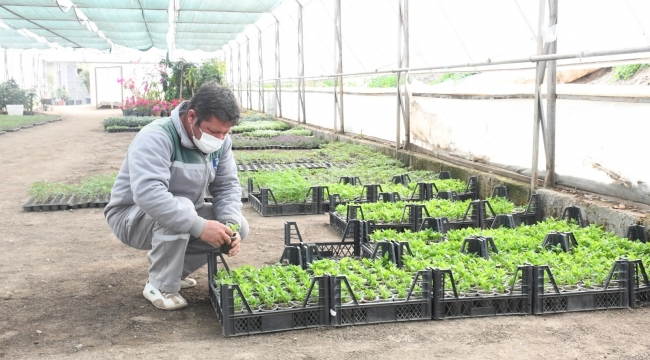 Kemer'de yerli tohum üretilmeye başlandı