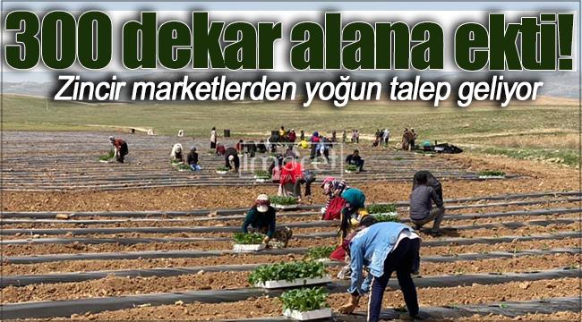 Karaman'daki zincir marketlerden yoğun talep geliyor!