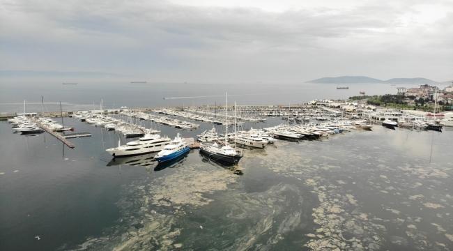 Pendik Marinada denizi kaplayan deniz salyaları havadan görüntülendi