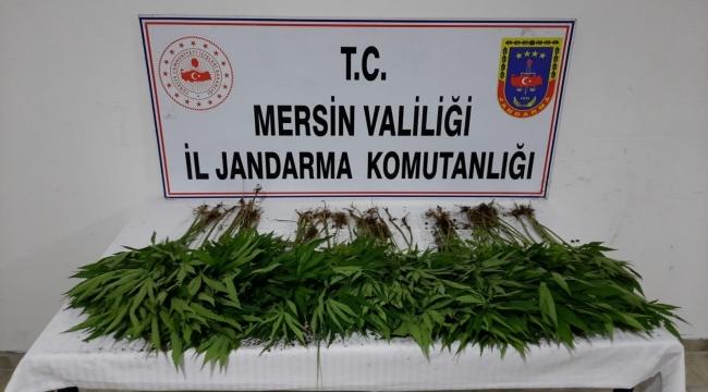 Mersin'de uyuşturucu operasyonu: 7 gözaltı