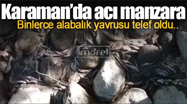 Karaman'da acı manzara! Binlerce balık telef oldu