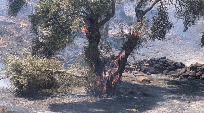 Söke'deki yangına itfaiyenin müdahalesi sürüyor