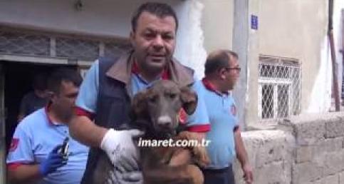 Açlıktan ve suszluktan ölmek üzere olan köpeği itfaiye ekipleri kurtardı